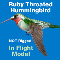 ruby throated hummingbird 3d c4d