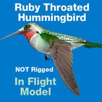 ruby throated hummingbird 3d c4d