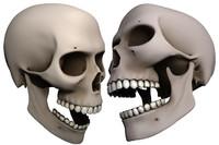 male human skull 3d obj