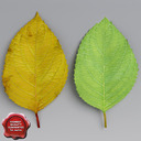 cherry leaves 3D models
