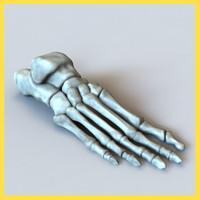 foot bones human max