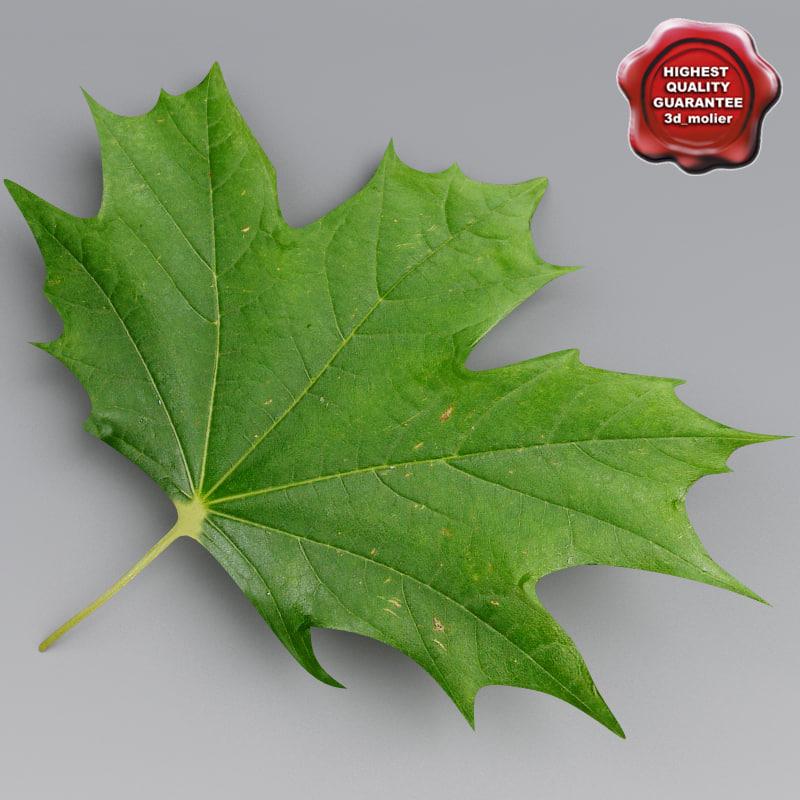 Maple_Leaves_Summer_00.jpg