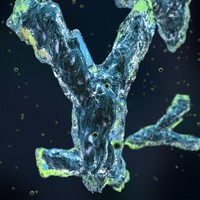 3d antibodies model