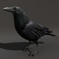 crow black raven c4d