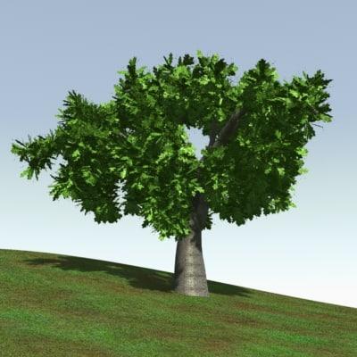oak000002.jpg