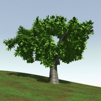 oak tree 3d lwo