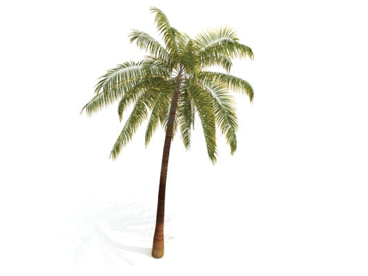palm tree 3d model  3D PALM TREE by Nodexis