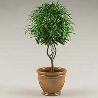 plant_18