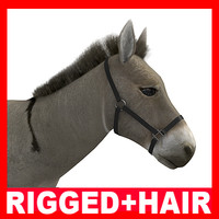 max donkey rigged hair