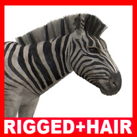 3ds max zebra rigged hair