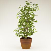 3d plant 14