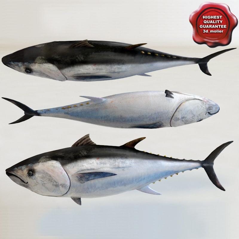 3d Tuna Fish: Tuna Modelled 3d Model