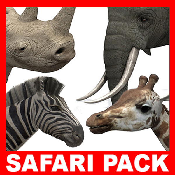 safari_th_01.jpg