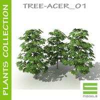 plants acer 01 tree 3d model