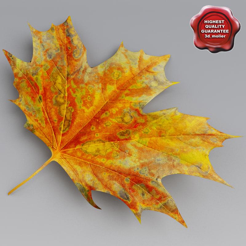 Maple_Leaves_Autumn_0.jpg
