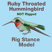 3d ruby throated hummingbird rig lightwave