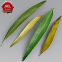 willow leaves 3D models