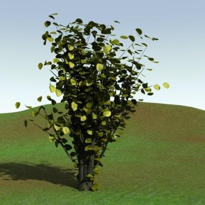 bush-1-000001.jpg