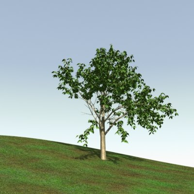 tree-birch-1-000002.jpg