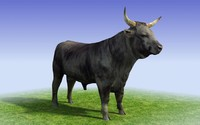 Black Bull Low Poly 3D Modelmax8.zip