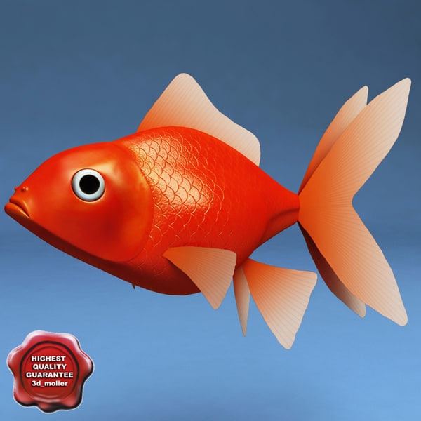 Gold_Fish_0.jpg