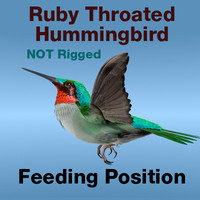 bird ruby throated hummingbird 3d c4d