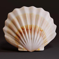 3d seashell sea model
