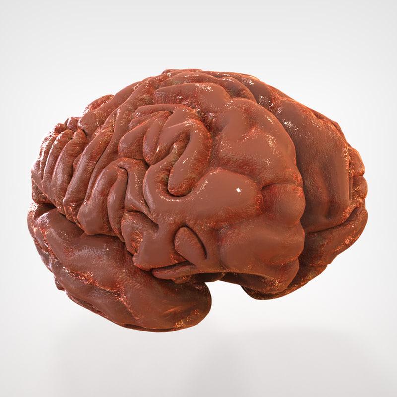 Brain_External_2.jpg
