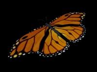 3d beautiful butterfly model