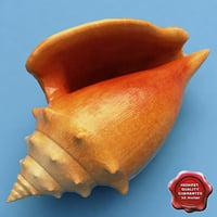 strombus alatus seashell 3d model