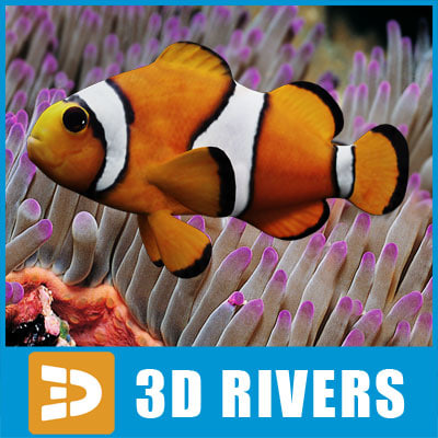 clown_fish_logo.jpg