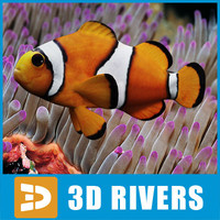 Clown fish by 3DRivers