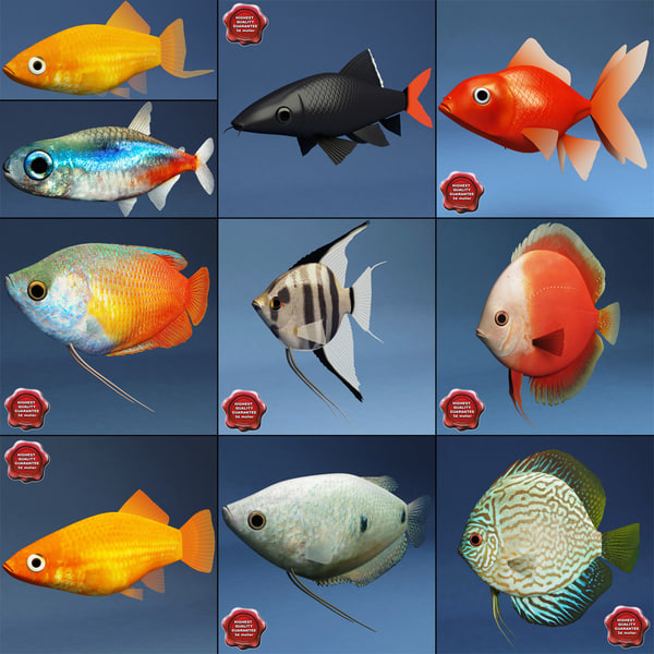 Aquarium_Fish_Collection_00.jpg