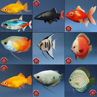 fish aquarium 3d model