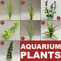 Aquarium Plants Collection