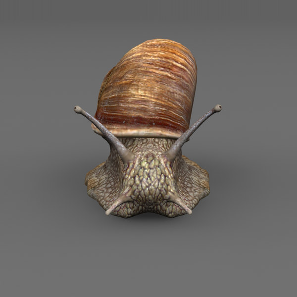 snail shell 3d model - Snail... by Stasma