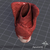 larynx throat 3d model