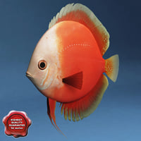 diskus red 3d model