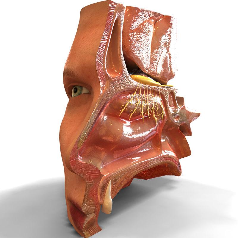 Nose.1.jpg