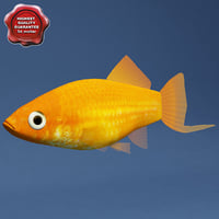swordtail male 3d max