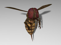 Monstrous Blood Wasp