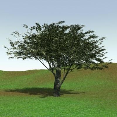 tree-olive-1-000001.jpg