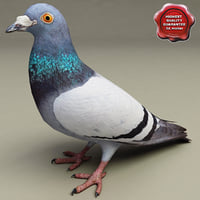 pigeon modelled 3d model