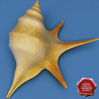 3d model seashell aporrhais