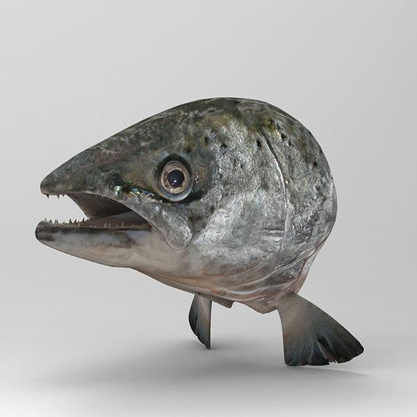 Head_Salmon