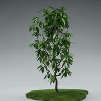 small_tree_01