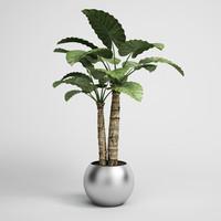 maya plant