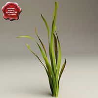 aquarium plant vallisneria gigantea 3d model