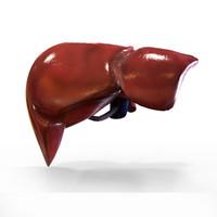 Liver External