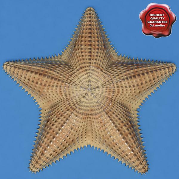 Sea_Star_0.jpg